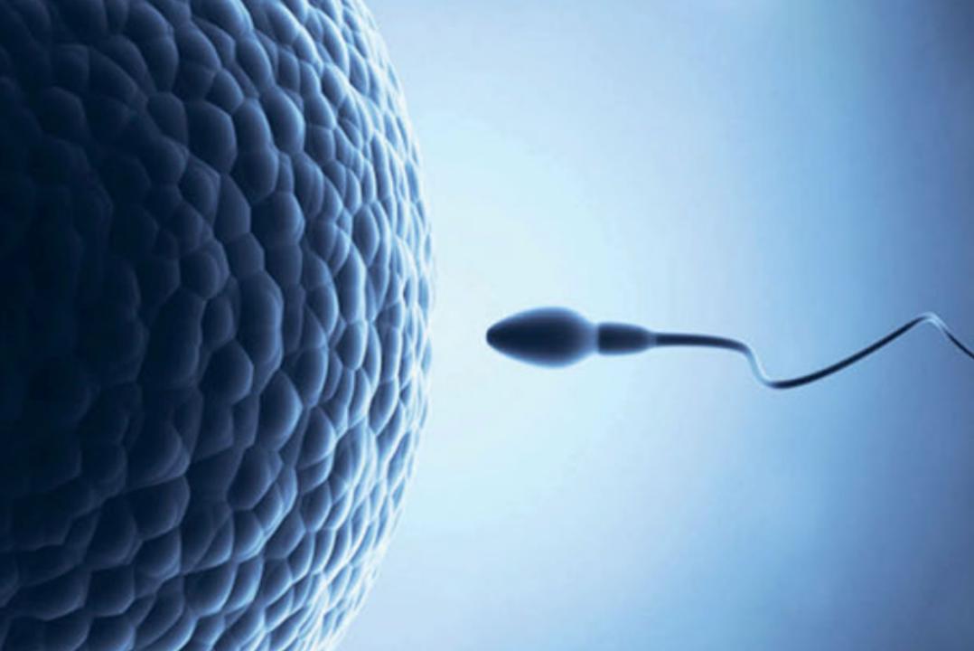 Sperm cell approaching an egg cell