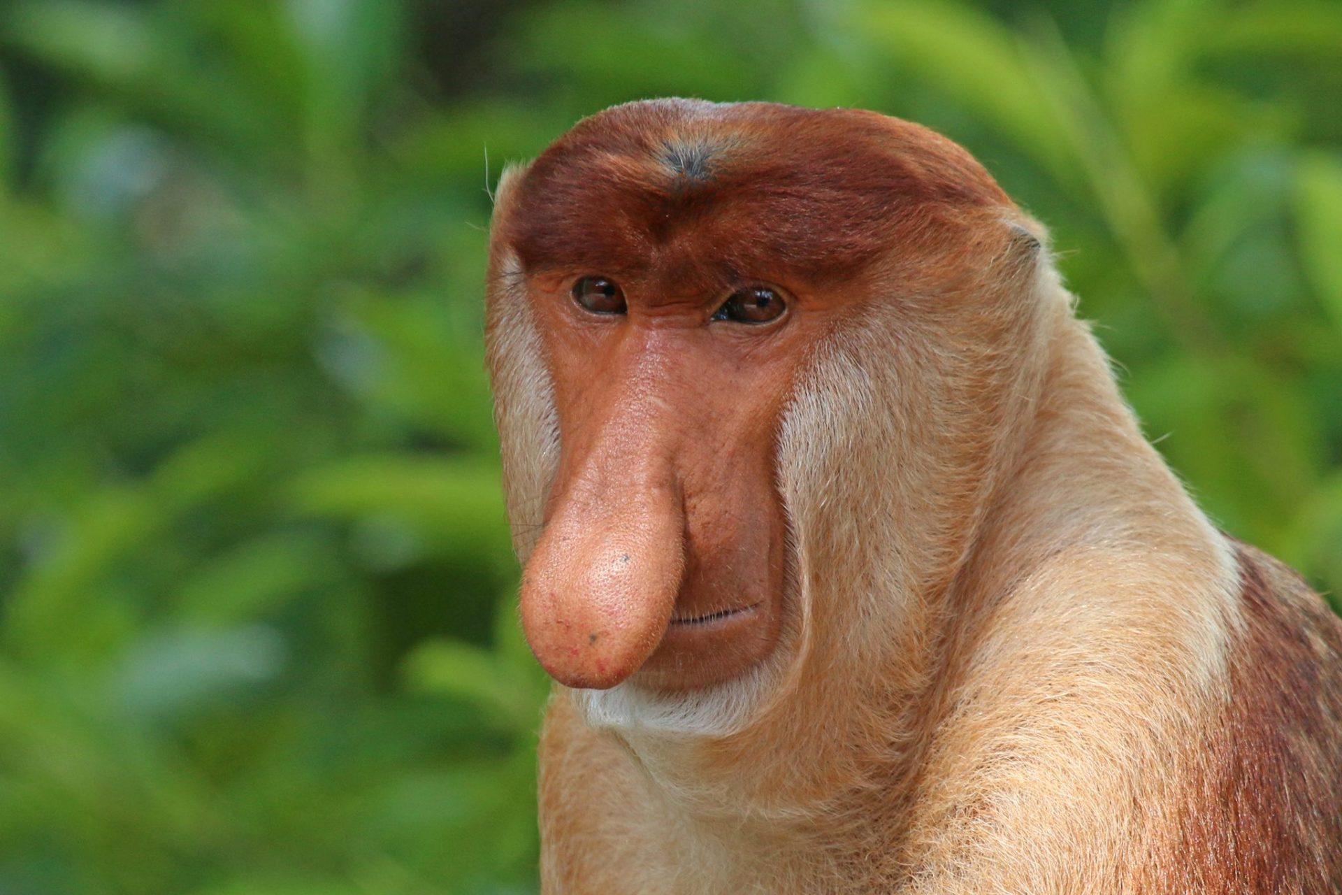 DICE talks: ugly species