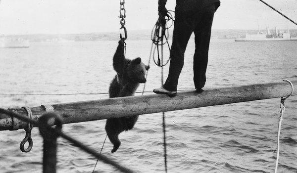 Trotsky the Bear © National Maritime Museum, London
